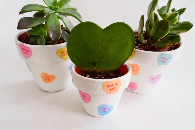 Valentine's Day Candy Heart Succulent Pot | Popcorn and Chocolate
